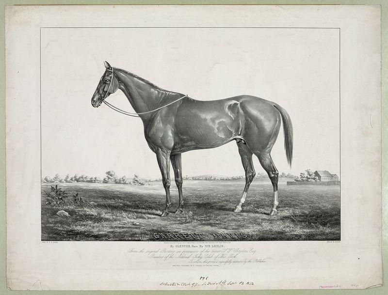 Garrett Davis, Thoroughbred Horse