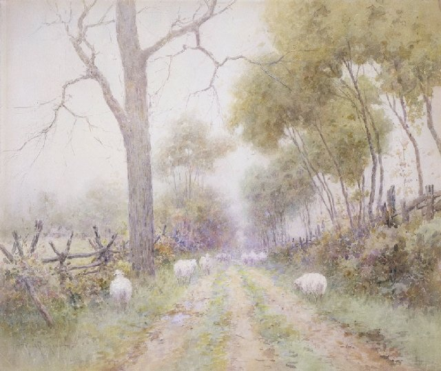 Sheep in Lane